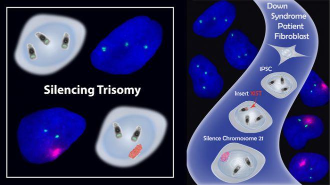 Silencing Trisomy
